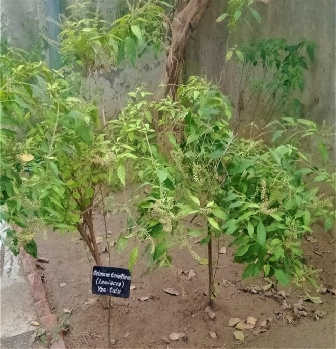 Herbal-3